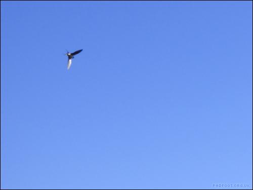 20-5-swifts