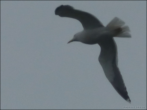 Dragon Goes Wild - Day 4, Seagulls