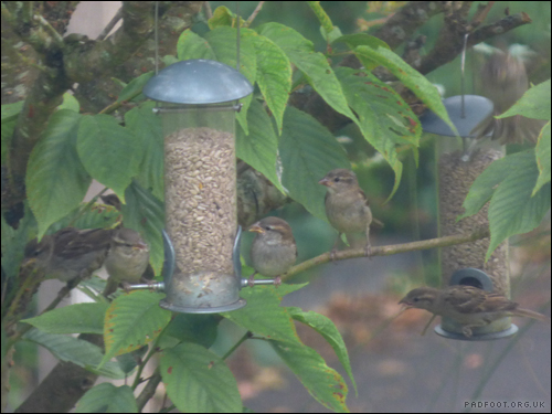 Dragon Goes Wild - Day 53 - Queuing up for the feeders
