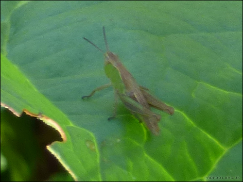 Dragon Goes Wild - Day 52 - Grasshoppers