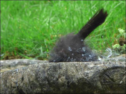 Dragon Goes Wild - Day 85 - Birdbath